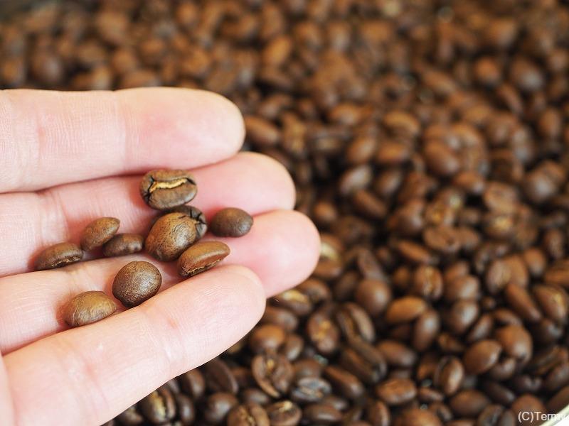 焙煎し終えたコーヒー豆