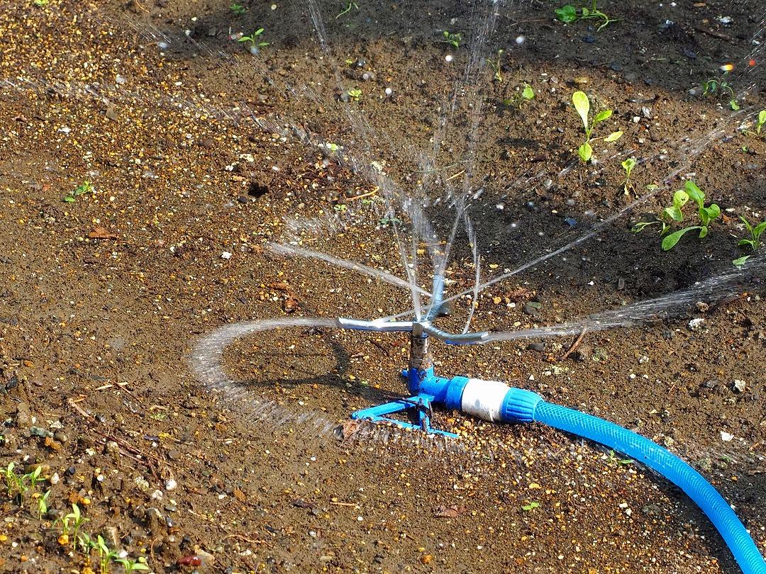 タカギ トリプルアームスプリンクラーでの散水の様子
